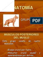 anatomia-100224185302-phpapp01
