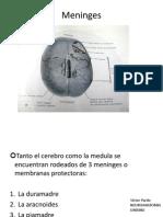 Meninges LCR Sistema Ventricular