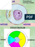 ciclocel