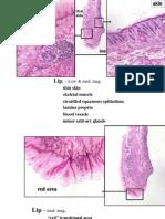 PR Oral Mucosa05L