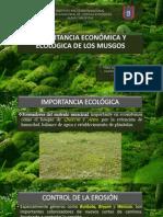 Importancia Ecológica y Económica de Bryophyta (musgos)
