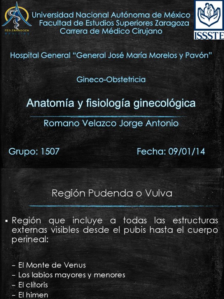 Anatomia y Fisiologia Ginecologica