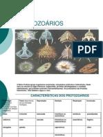 protozoarios0-100626214130-phpapp01