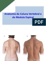 anatomiadacolunavertebraledamedulaespinal-120825090548-phpapp02