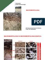 2.1 morfologia2013