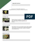 Caracteristicas Das Orquideas