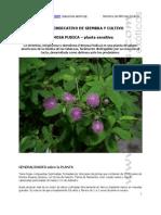 Manual Cultivo Mimosa Pudica Neocultivos