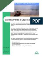 Sludge Bacteria Pellet