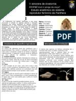 Apresentação1BANNERPantheraOnca.pptx