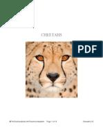 Cheetahs PREVIEW