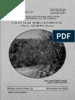 Colecta de Semilla Forestal en El Genero Pinus