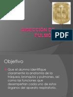 Diseccion de Pulmon