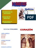 HistoCorazónyVasos[1]