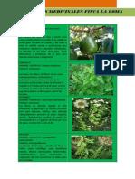 Fotos Plantas Medicinales
