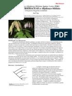 Esp176 Peru Burseraceae