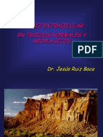 Matriz Extracelular Normal y Neoplasicos