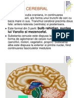 Tr. Cerebral Si n.cranieni
