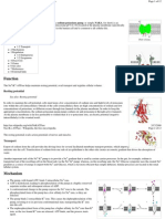 Sodium-Potassium Pump on Wikipedia (Landscape)