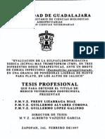Lizarraga Diaz Fredy