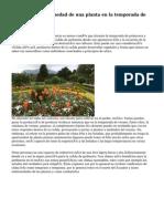 Jardineria y enfermedad de una planta en la temporada de primavera