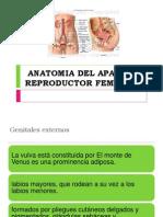 anatomiadelaparatoreprodfemen-130720103227-phpapp01