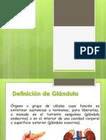 Anatomia y Fisiologia Glandulas Suprarenales
