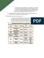 Resumen Tema 17 Sistema Excretor