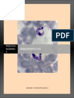 MGII Practica 4 Hemoparasitos