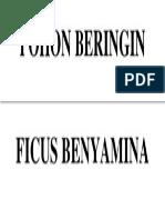 POHON BERINGIN