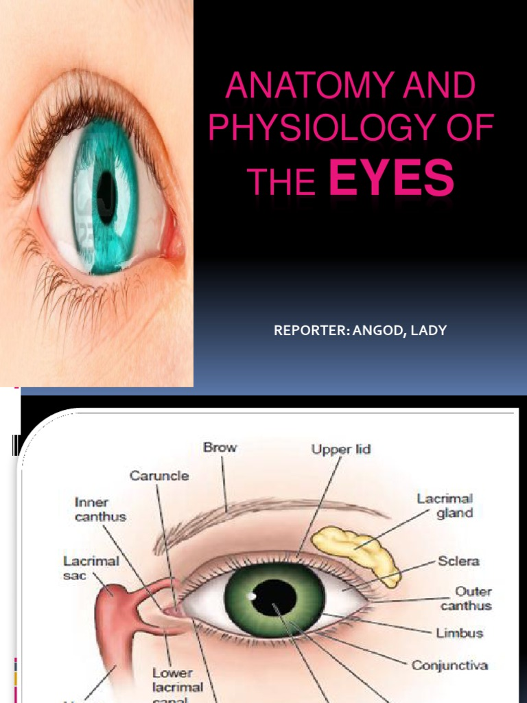 Anatomy and Physiology of the Eyes | Human Eye | Visual System
