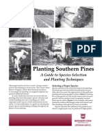 Planting Southern Pines