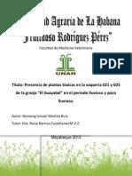Presencia Plantas Toxicas Periodo Lluvioso y Poco Lluvioso