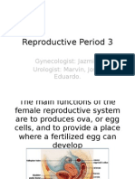 Rproductive System 3