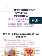 Reproductive 4
