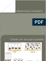 Forme Si Dimensiuni Celulare