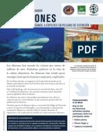 La Marea Esta Cambiando Tiburones de Amos de Los Oceanos a Especies en Peligro de Extincion