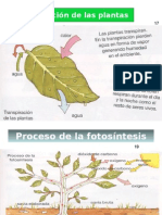 Reproduccion asexual vegetal pdf