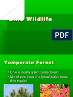 Ohio Wildlife