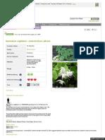 Www Pfaf Org User Plant Aspx LatinName Epimedium Sagittatum