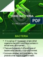 Bacteria A