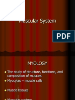 Muscular System Zool200