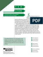 Pigweed Identification Guide