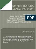 ppt Aracnida