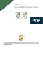 Caja CVT