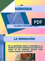 Dipositivas de Agnosia