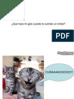 Ottavio Cautilli Mi Gatito Diapositivas