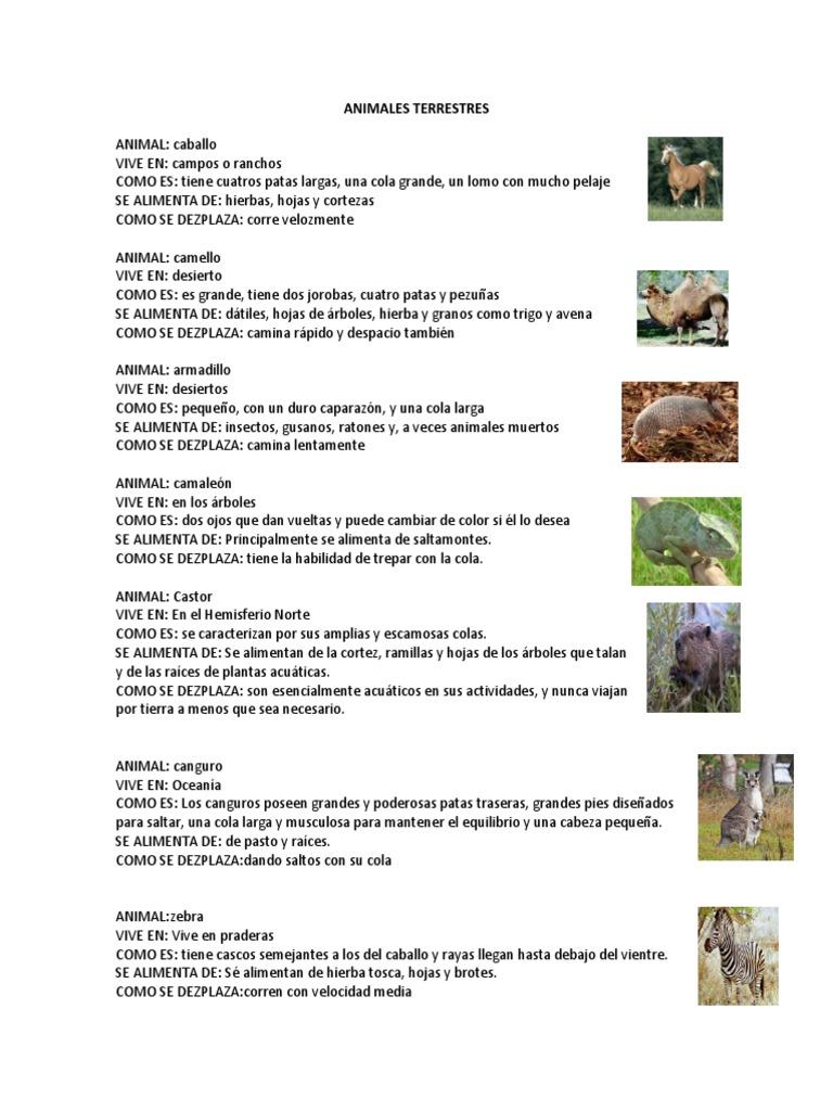 Animales Terrestres Insectos Cerdo Domestico