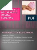 Desarrollo Del Aparato Genital Femenino