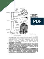 esquema_Estructura_delhueso