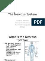 Nervous System Per 7